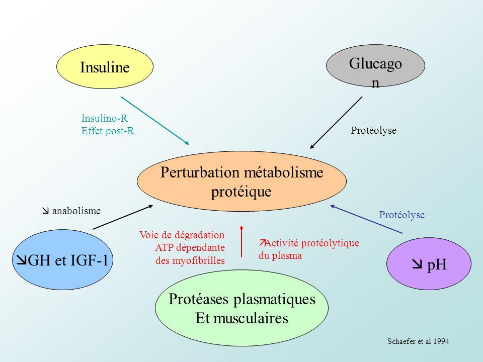 Perturbation métabolisme protéique