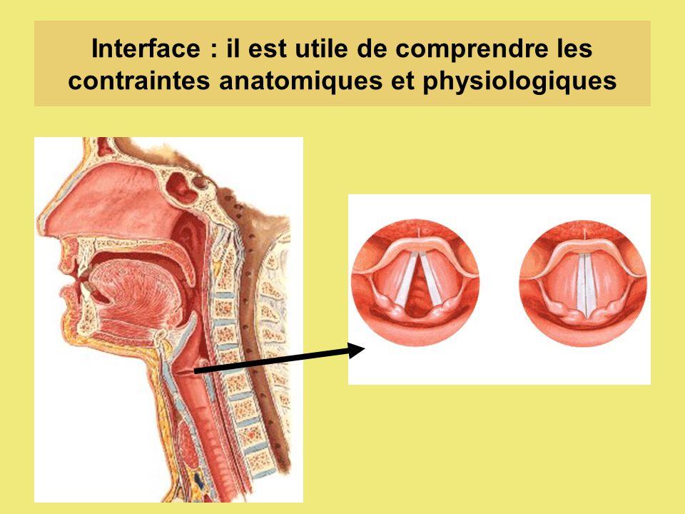 Interface : il est utile de comprendre les contraintes anatomiques et physiologiques