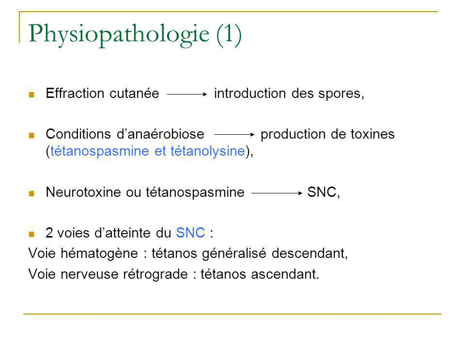 Physiopathologie (1) Effraction cutanée introduction des spores,