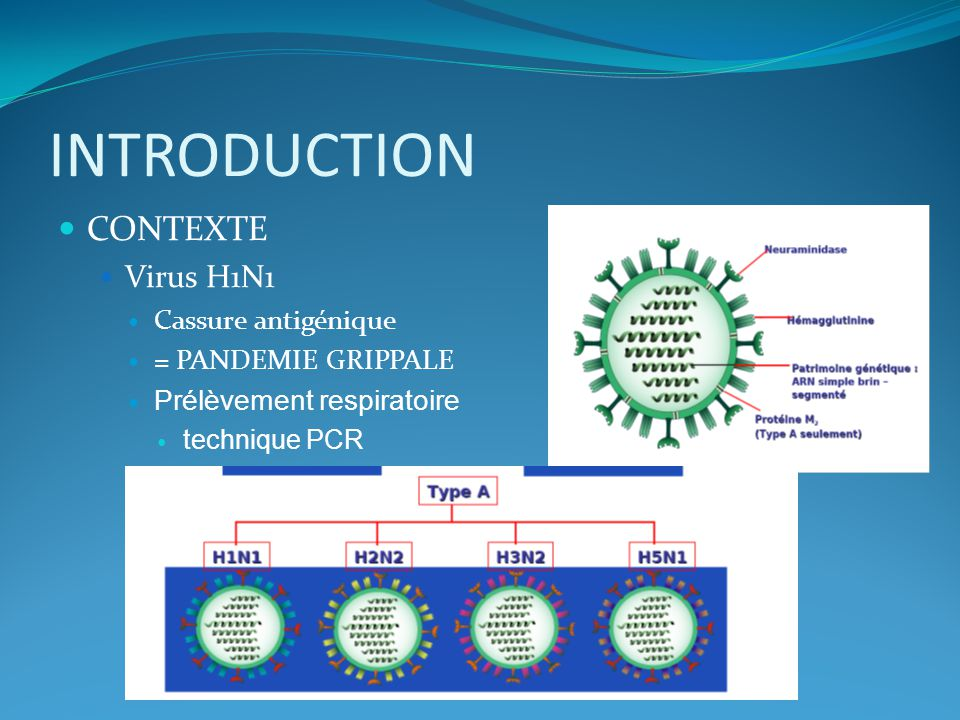 INTRODUCTION CONTEXTE Virus H1N1 Cassure antigénique