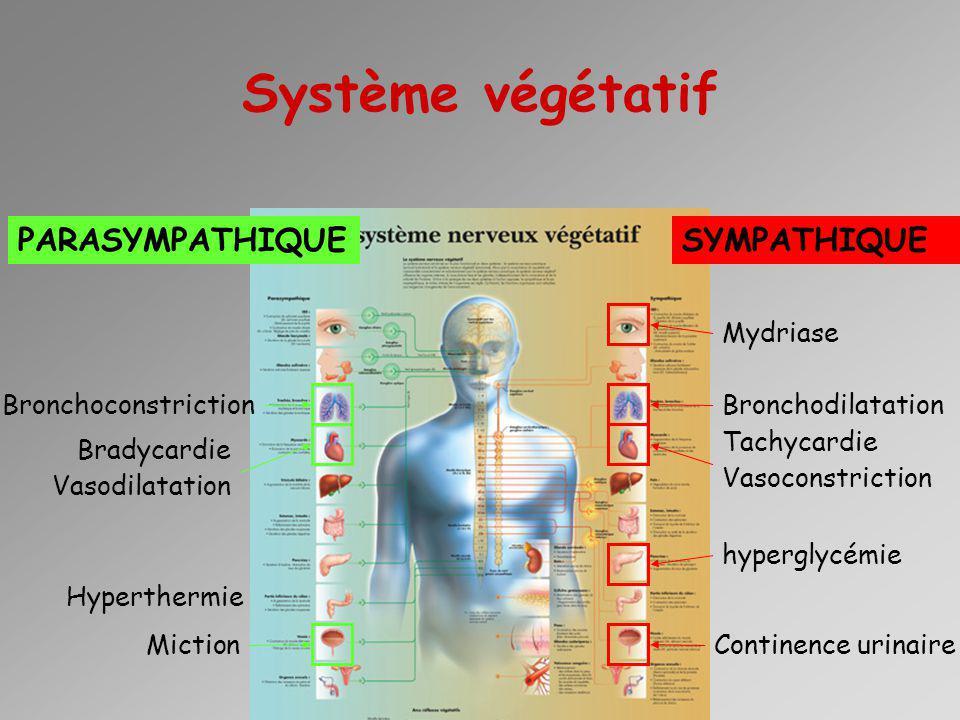 Système végétatif PARASYMPATHIQUE SYMPATHIQUE Mydriase