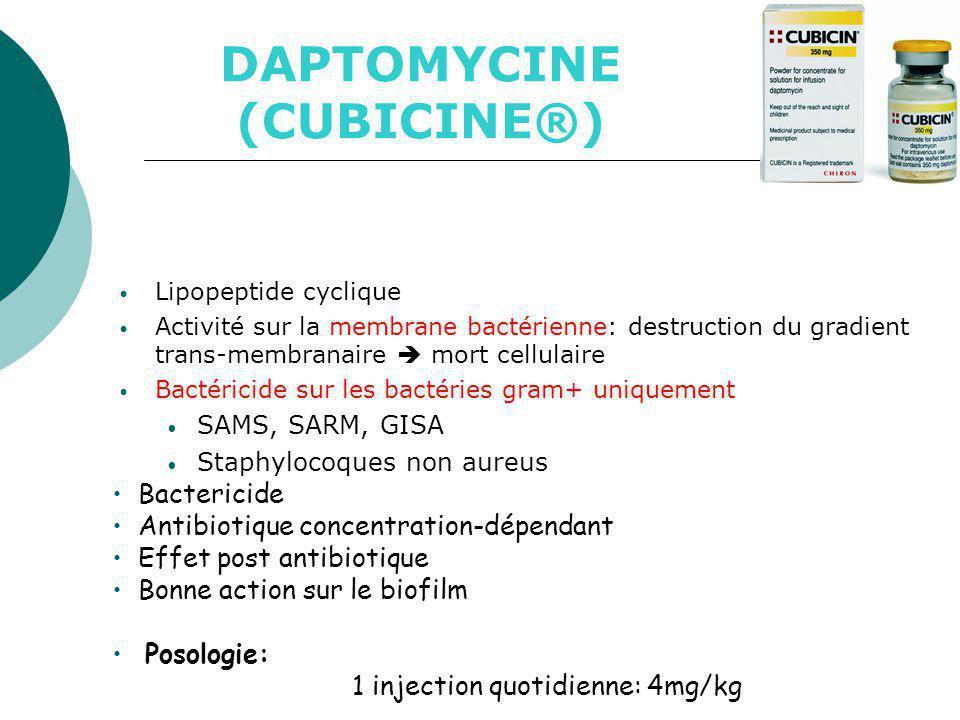 DAPTOMYCINE (CUBICINE®)