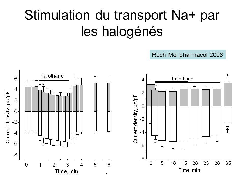 Stimulation du transport Na+ par les halogénés