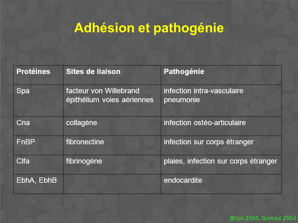 Adhésion et pathogénie