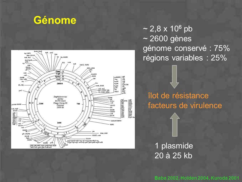 Génome ~ 2,8 x 106 pb ~ 2600 gènes génome conservé : 75%