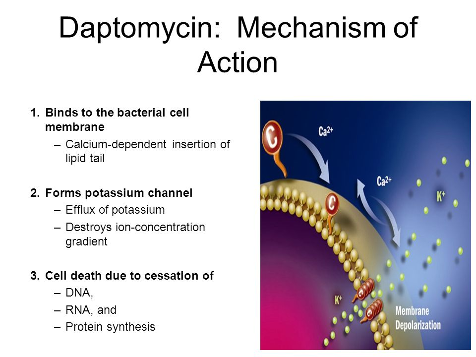 Daptomycin: Mechanism of Action