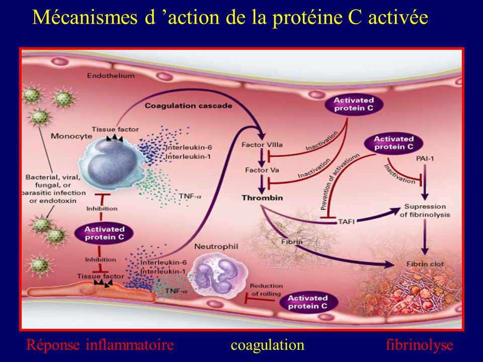 Mécanismes d 'action de la protéine C activée