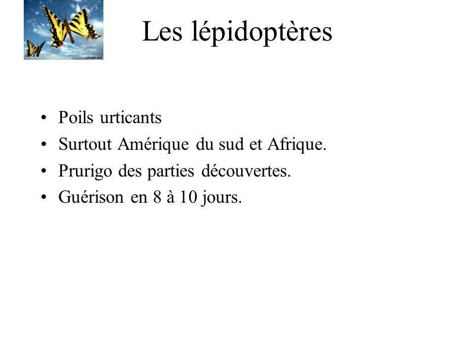 Les lépidoptères Poils urticants Surtout Amérique du sud et Afrique.