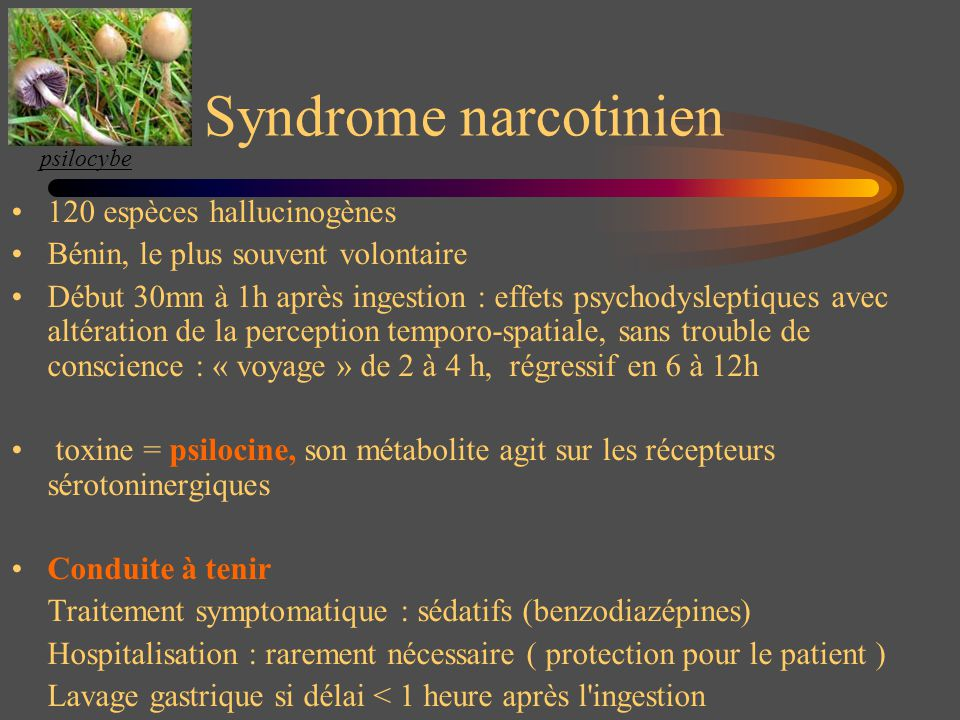 Syndrome narcotinien 120 espèces hallucinogènes