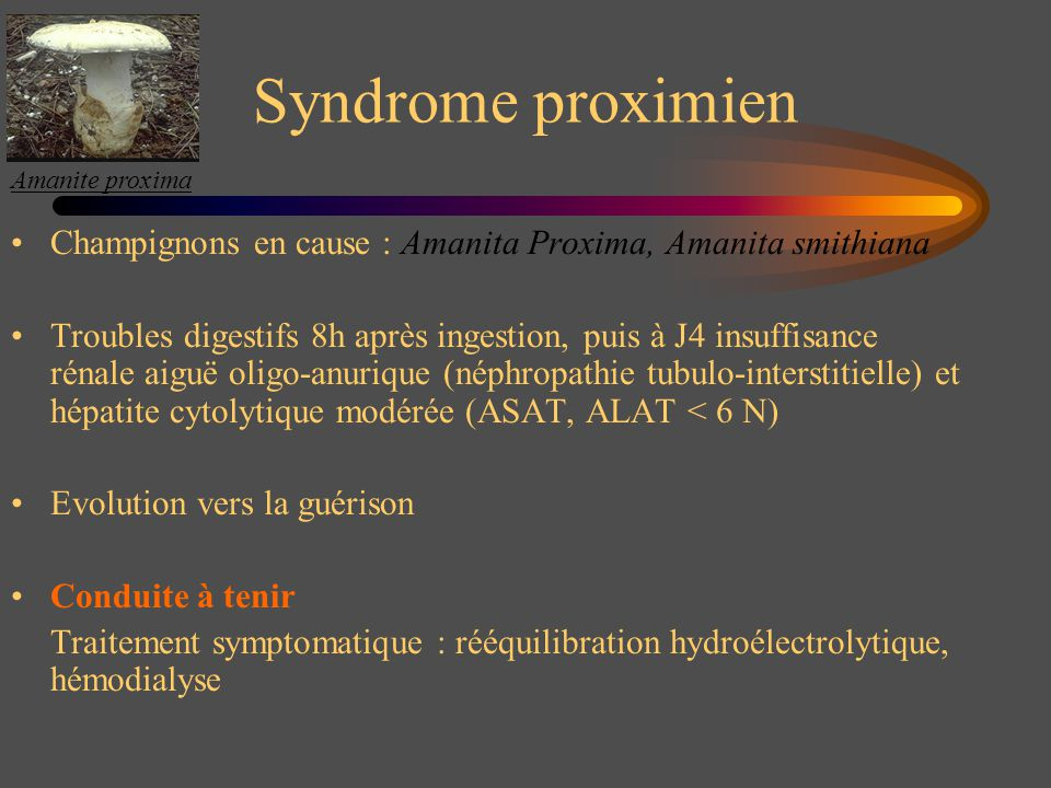 Amanite proxima Syndrome proximien. Champignons en cause : Amanita Proxima, Amanita smithiana.