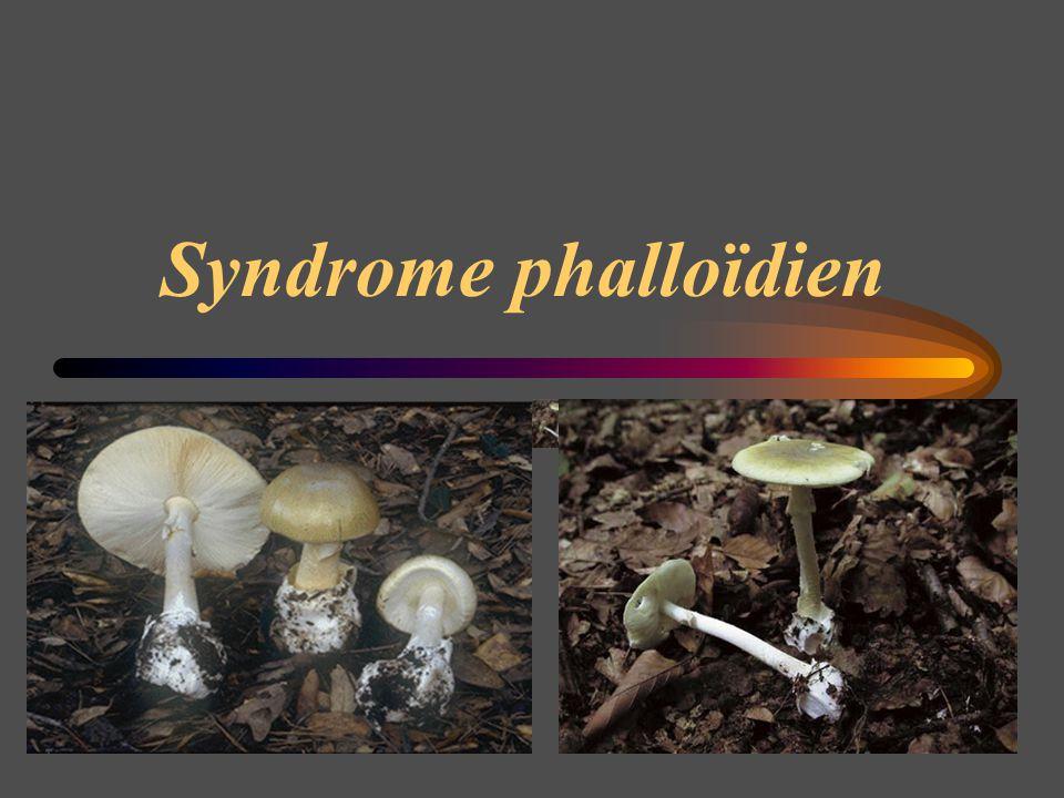 Syndrome phalloïdien
