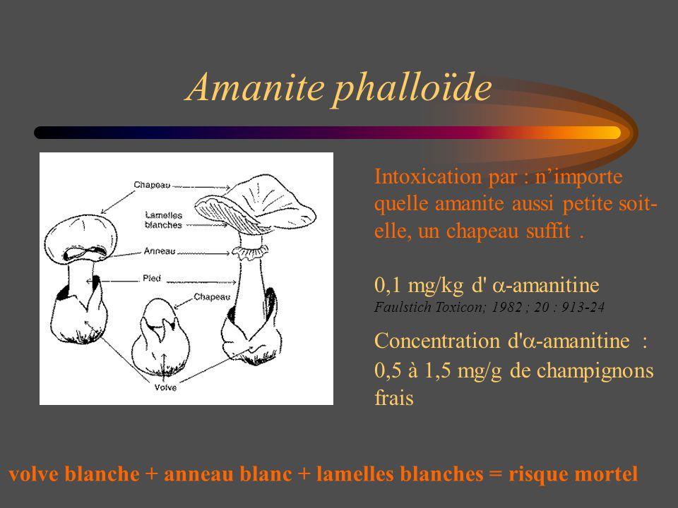 Amanite phalloïde Intoxication par : n'importe quelle amanite aussi petite soit-elle, un chapeau suffit .