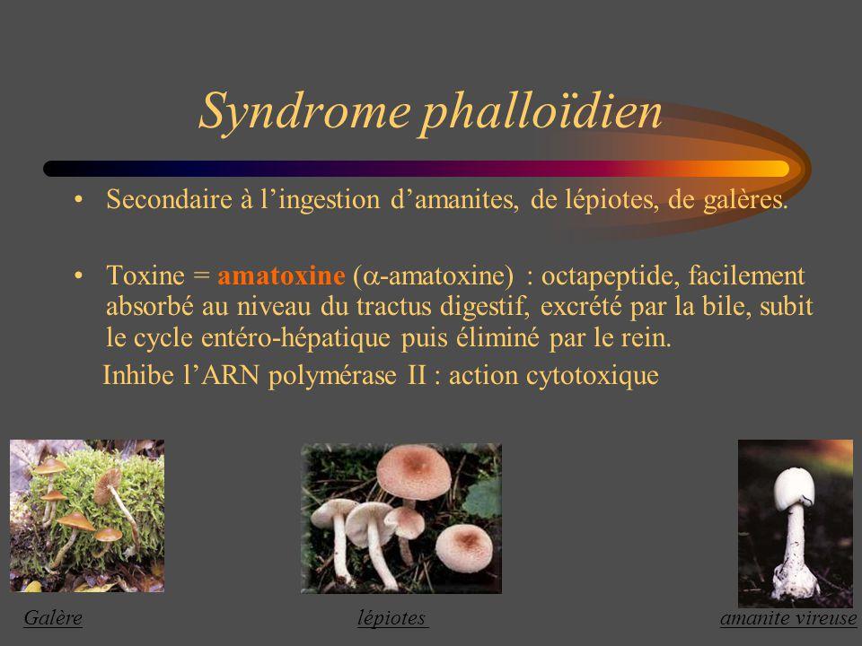 Syndrome phalloïdien Secondaire à l'ingestion d'amanites, de lépiotes, de galères.