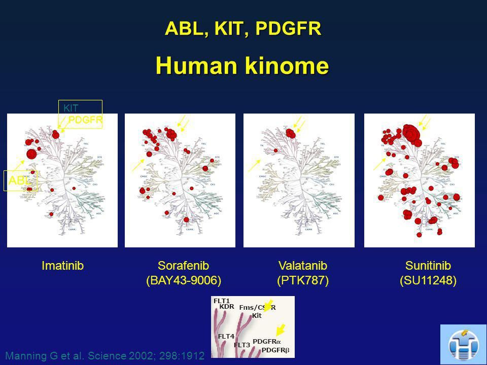 Human kinome ABL, KIT, PDGFR ABL Imatinib Sorafenib (BAY43-9006)