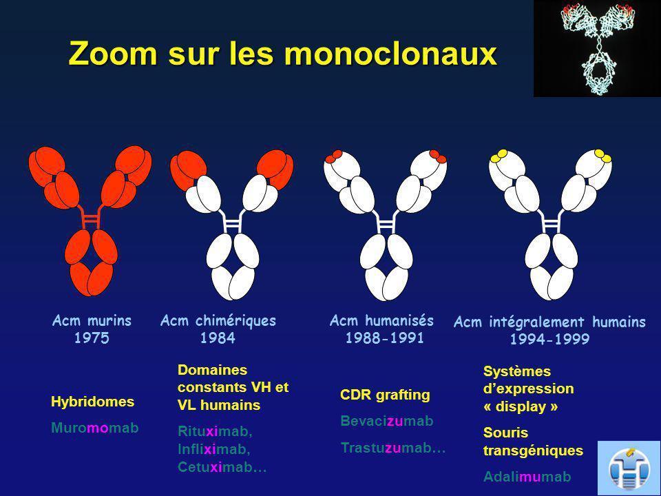 Zoom sur les monoclonaux Acm intégralement humains