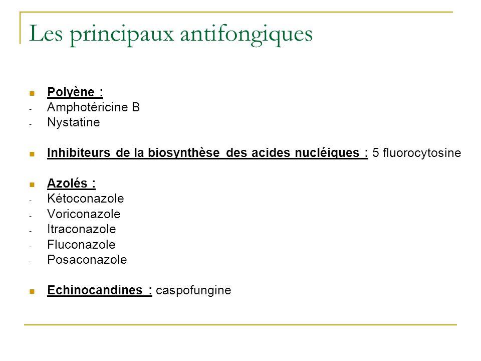Les principaux antifongiques