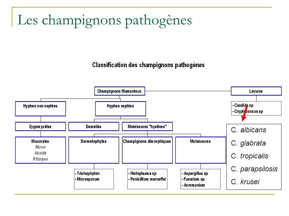 Les champignons pathogènes