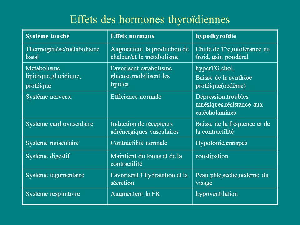 Effets des hormones thyroïdiennes