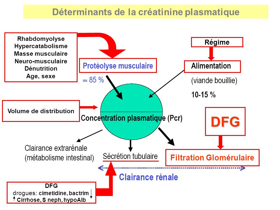 DFG Déterminants de la créatinine plasmatique Filtration Glomérulaire