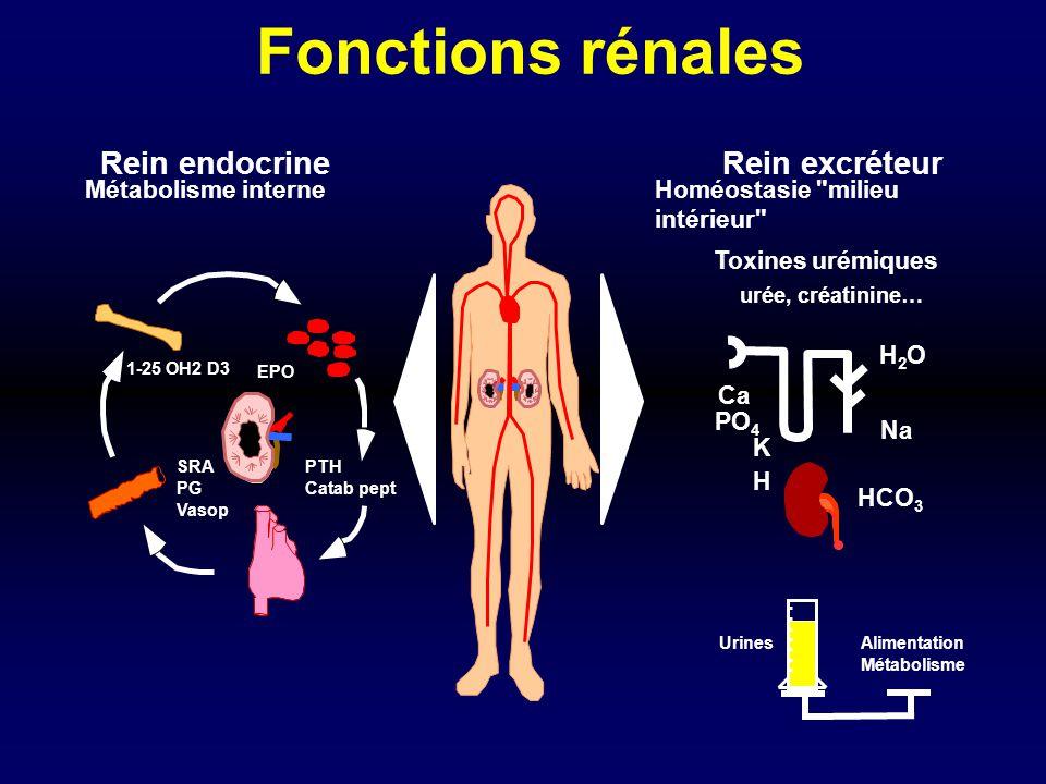 Fonctions rénales Rein endocrine Rein excréteur Métabolisme interne