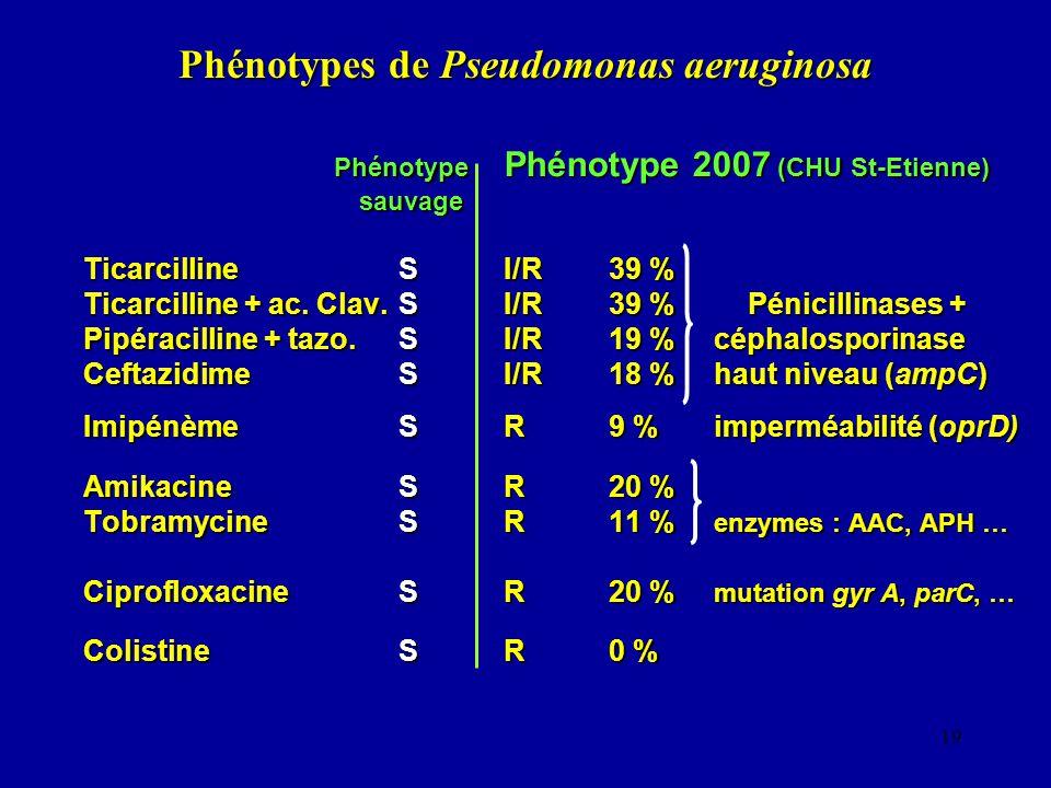 Phénotypes de Pseudomonas aeruginosa