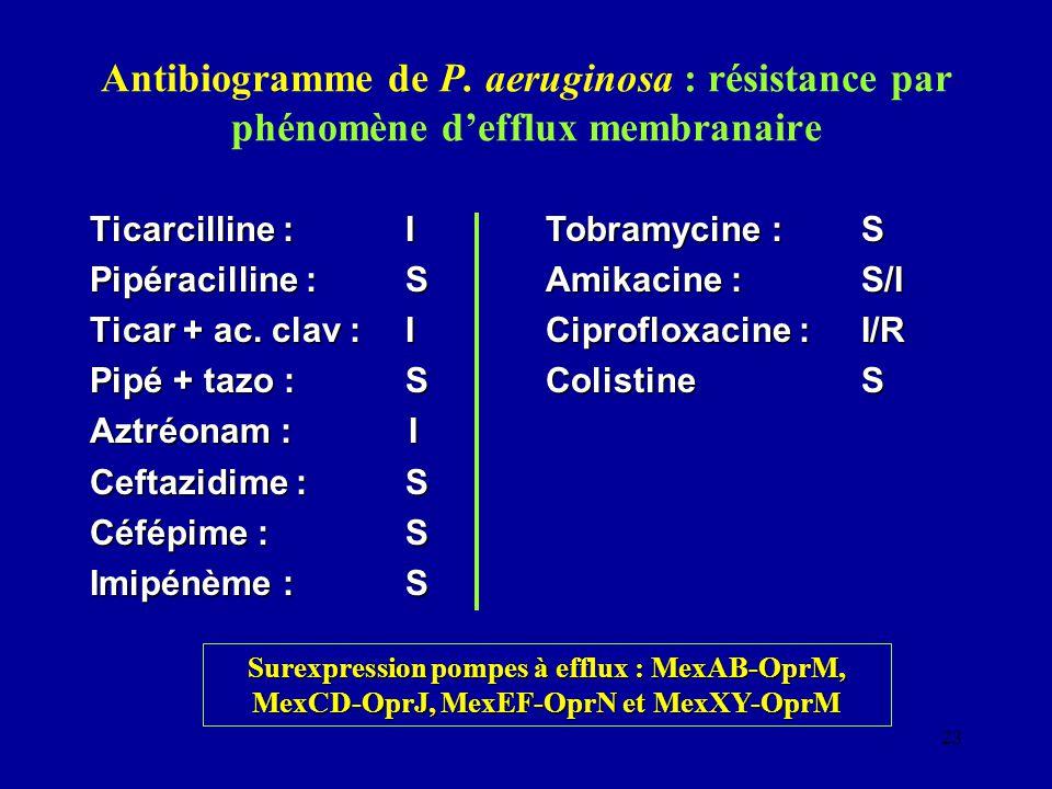 Antibiogramme de P. aeruginosa : résistance par phénomène d'efflux membranaire