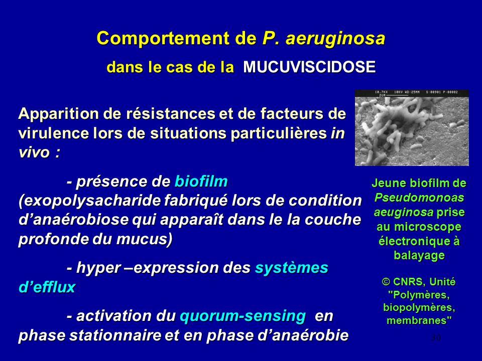 Comportement de P. aeruginosa dans le cas de la MUCUVISCIDOSE