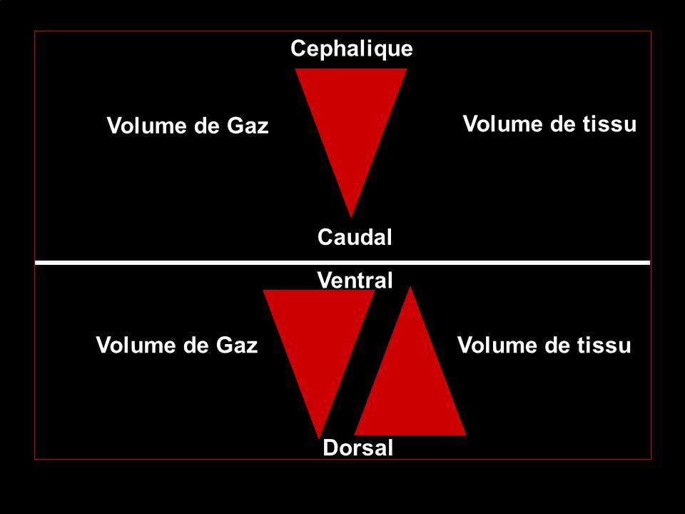 Cephalique Volume de Gaz Volume de tissu Caudal Ventral Volume de Gaz
