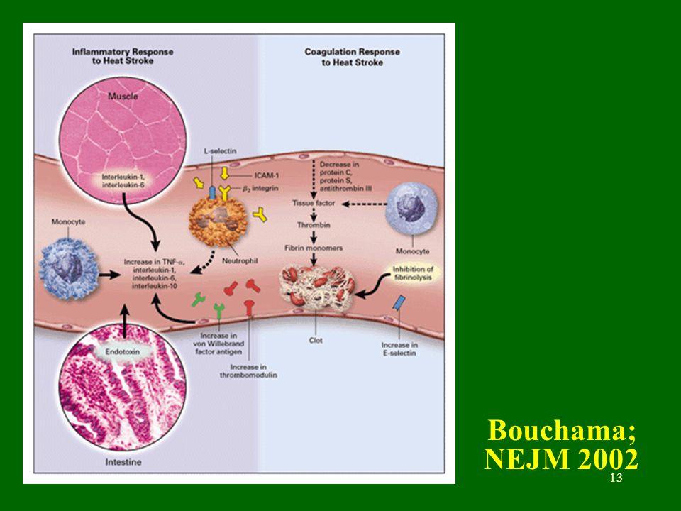 Bouchama; NEJM 2002 B Misset Desc 18-06-2004