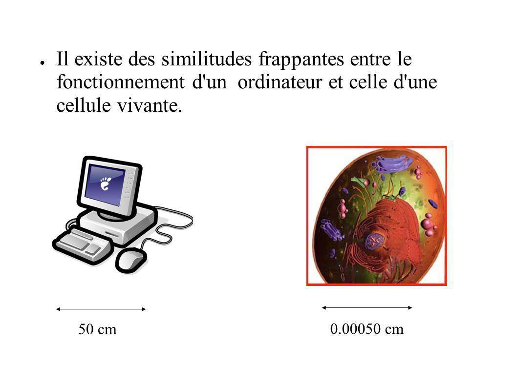Il existe des similitudes frappantes entre le fonctionnement d un ordinateur et celle d une cellule vivante.