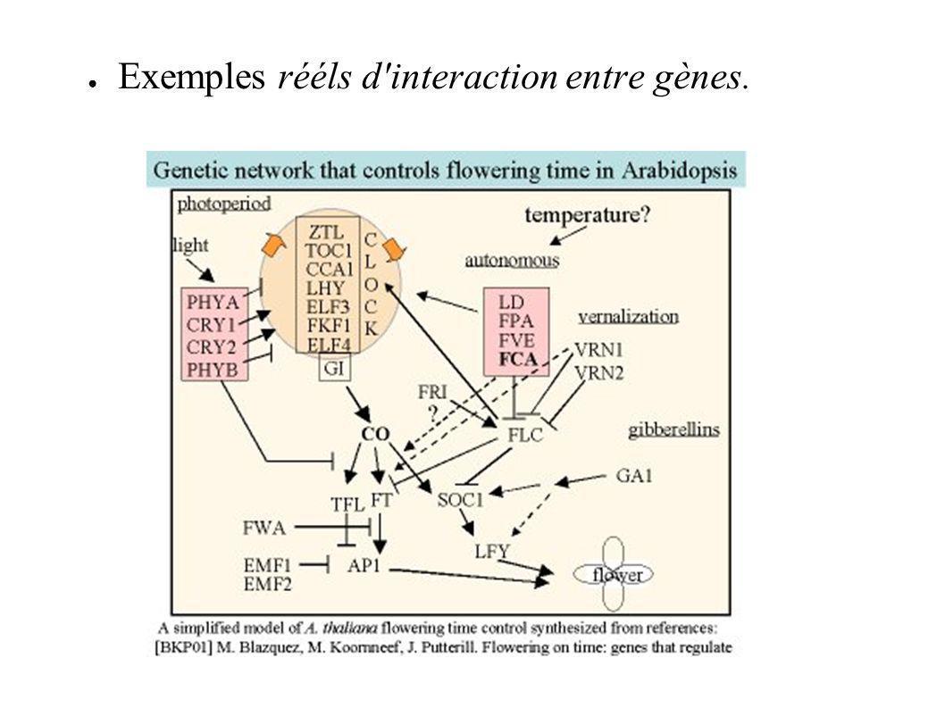 Exemples rééls d interaction entre gènes.