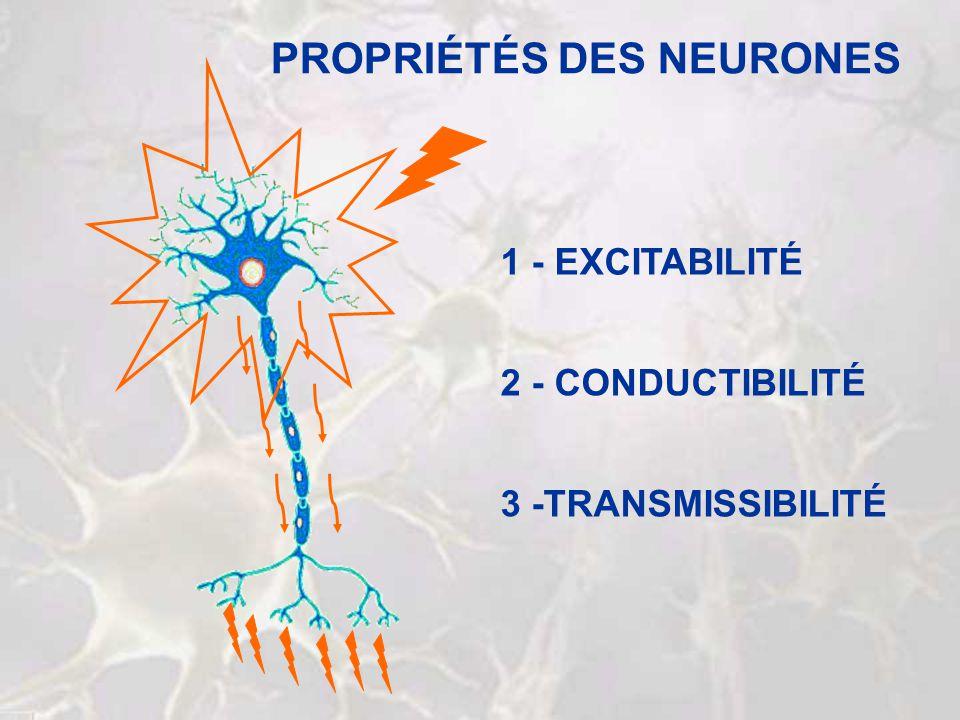 PROPRIÉTÉS DES NEURONES