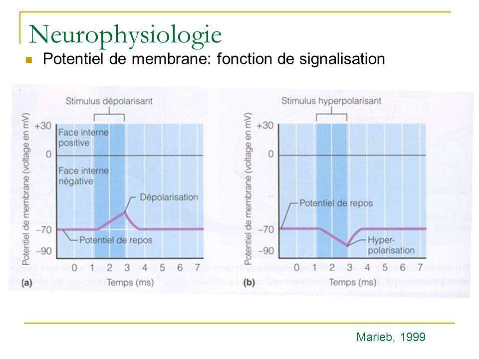 Neurophysiologie Potentiel de membrane: fonction de signalisation