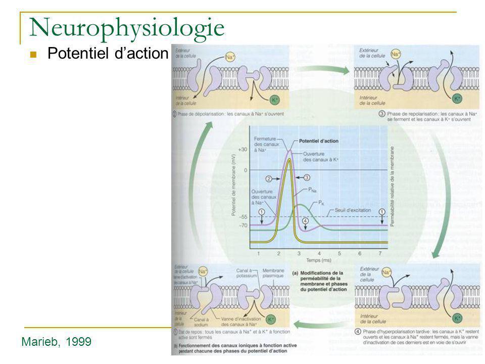 Neurophysiologie Potentiel d'action Marieb, 1999