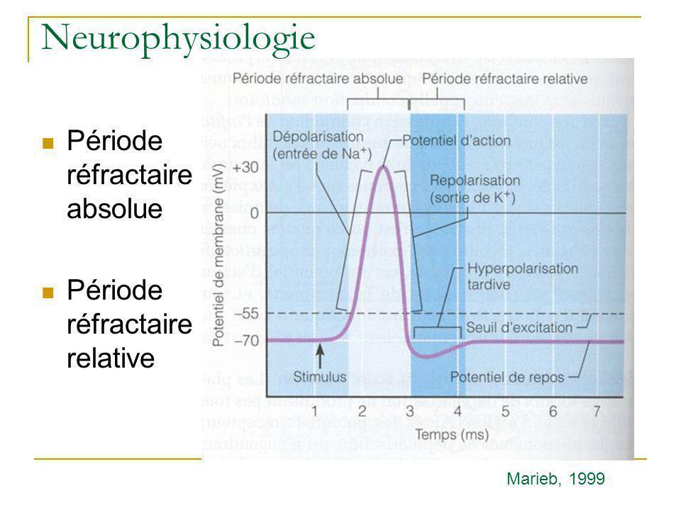 Neurophysiologie Période réfractaire absolue