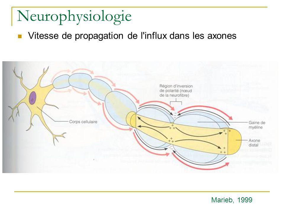 Neurophysiologie Vitesse de propagation de l influx dans les axones