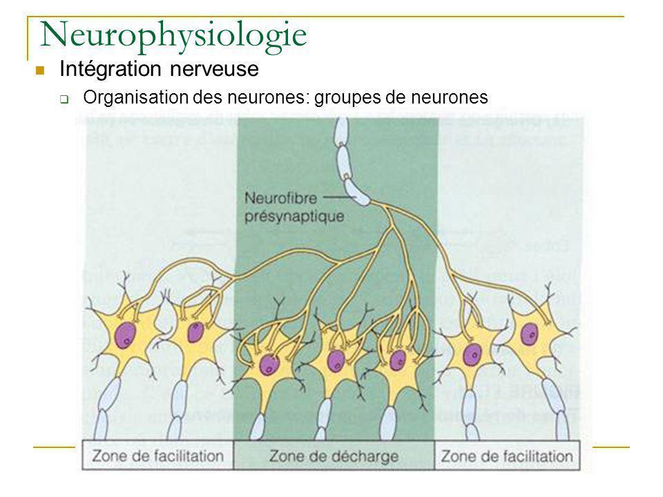 Neurophysiologie Intégration nerveuse