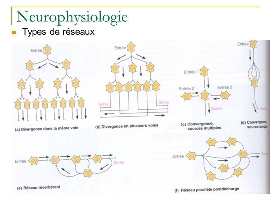 Neurophysiologie Types de réseaux