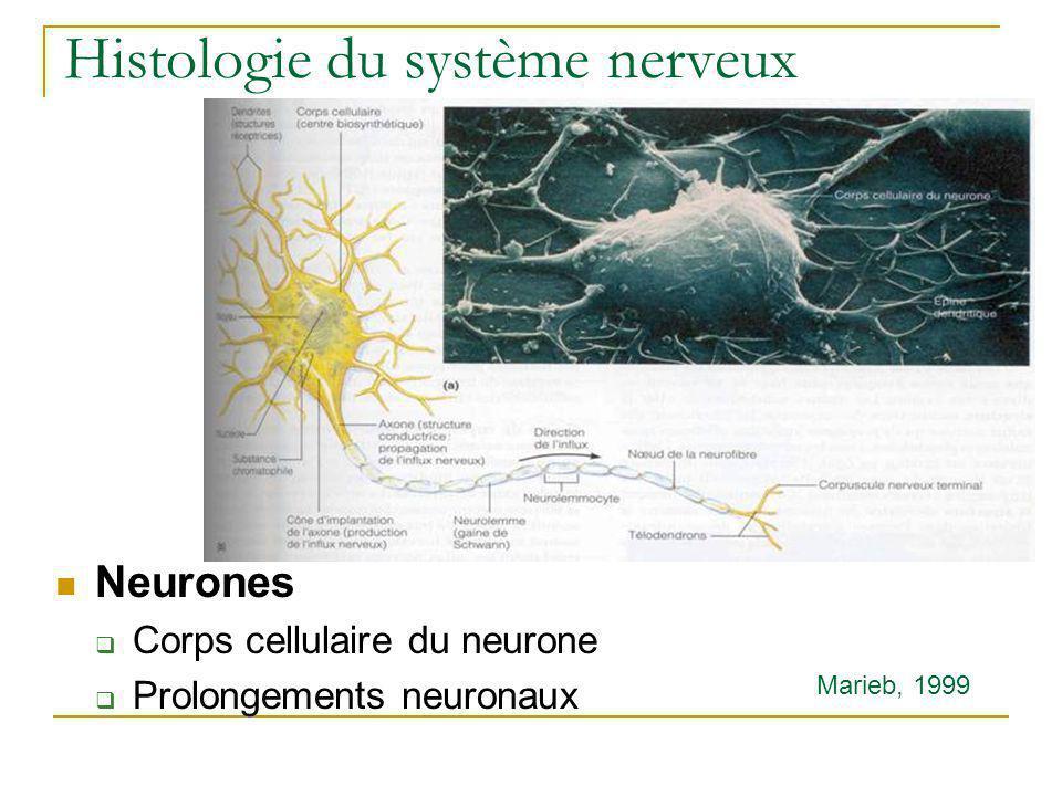 Histologie du système nerveux
