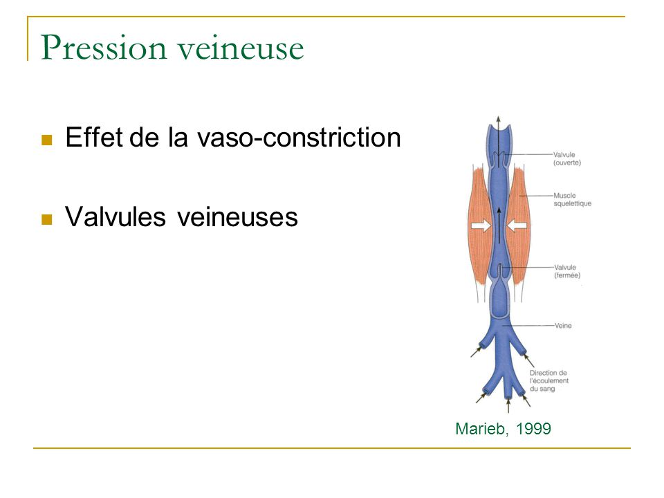 Pression veineuse Effet de la vaso-constriction Valvules veineuses