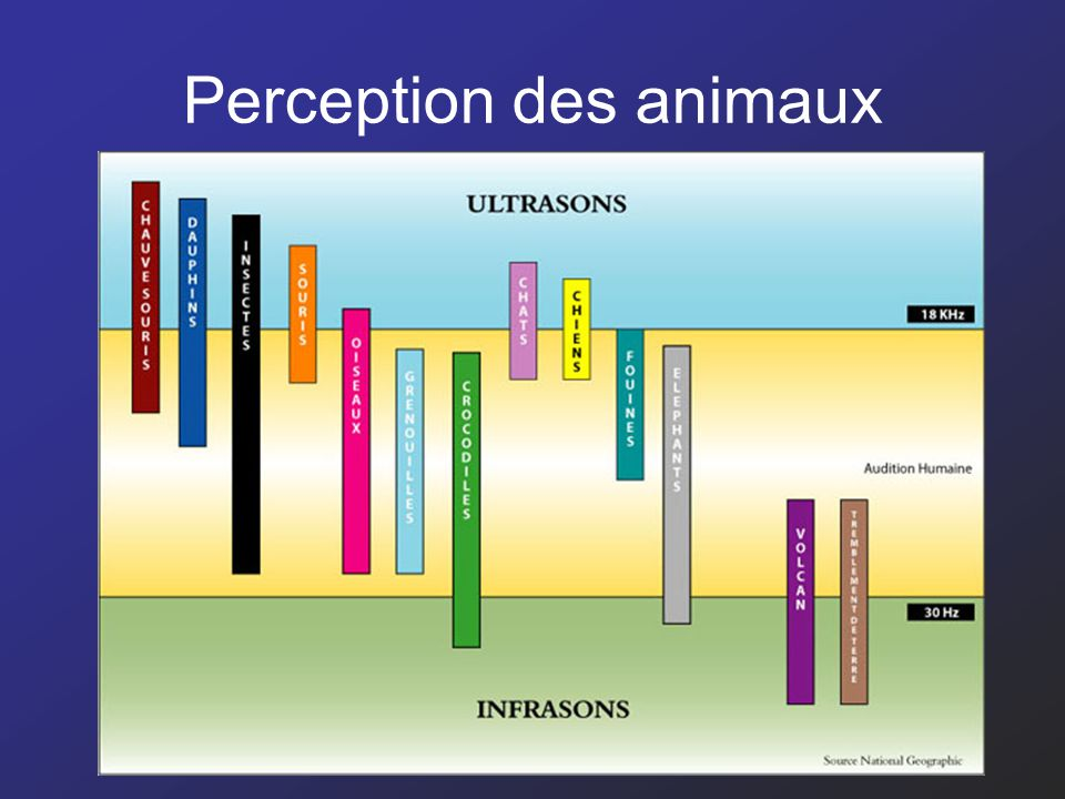 Perception des animaux