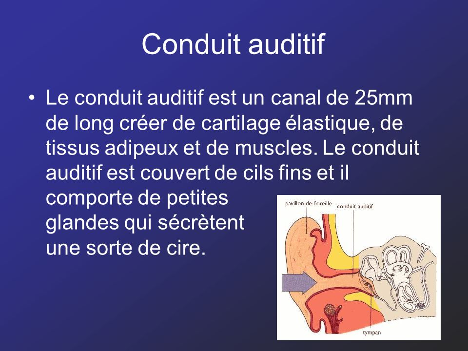 Conduit auditif