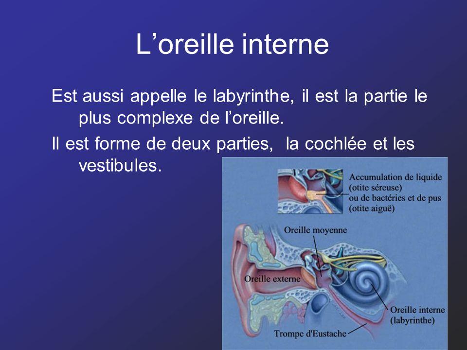 L'oreille interne Est aussi appelle le labyrinthe, il est la partie le plus complexe de l'oreille.