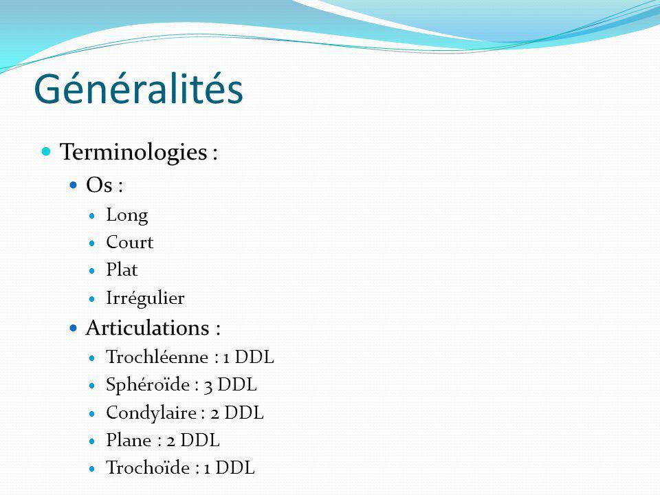 Généralités Terminologies : Os : Articulations : Long Court Plat