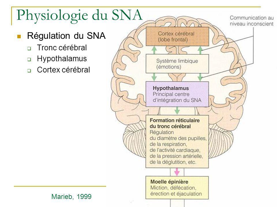Physiologie du SNA Régulation du SNA Tronc cérébral Hypothalamus