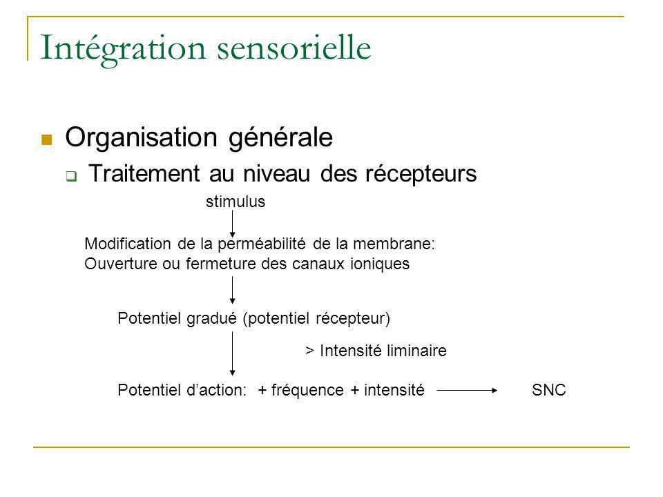 Intégration sensorielle