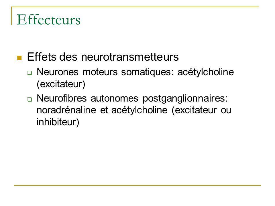 Effecteurs Effets des neurotransmetteurs