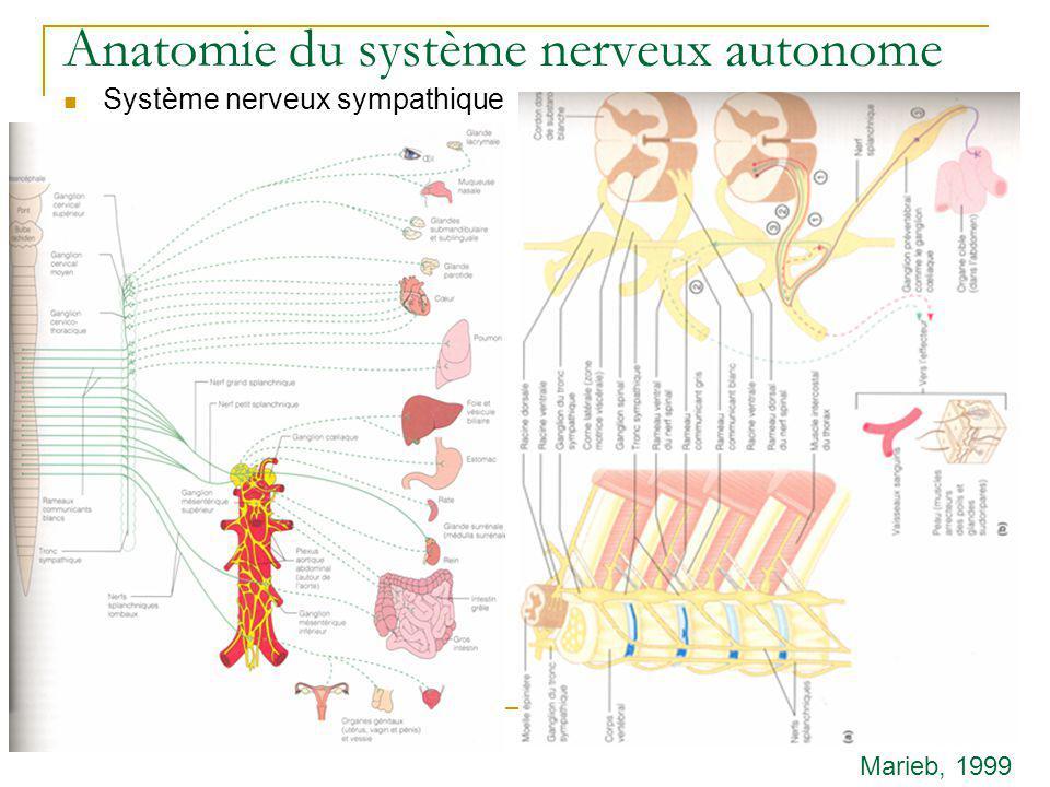 Anatomie du système nerveux autonome