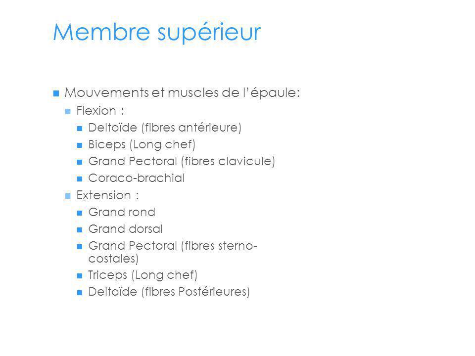 Membre supérieur Mouvements et muscles de l'épaule: Flexion :