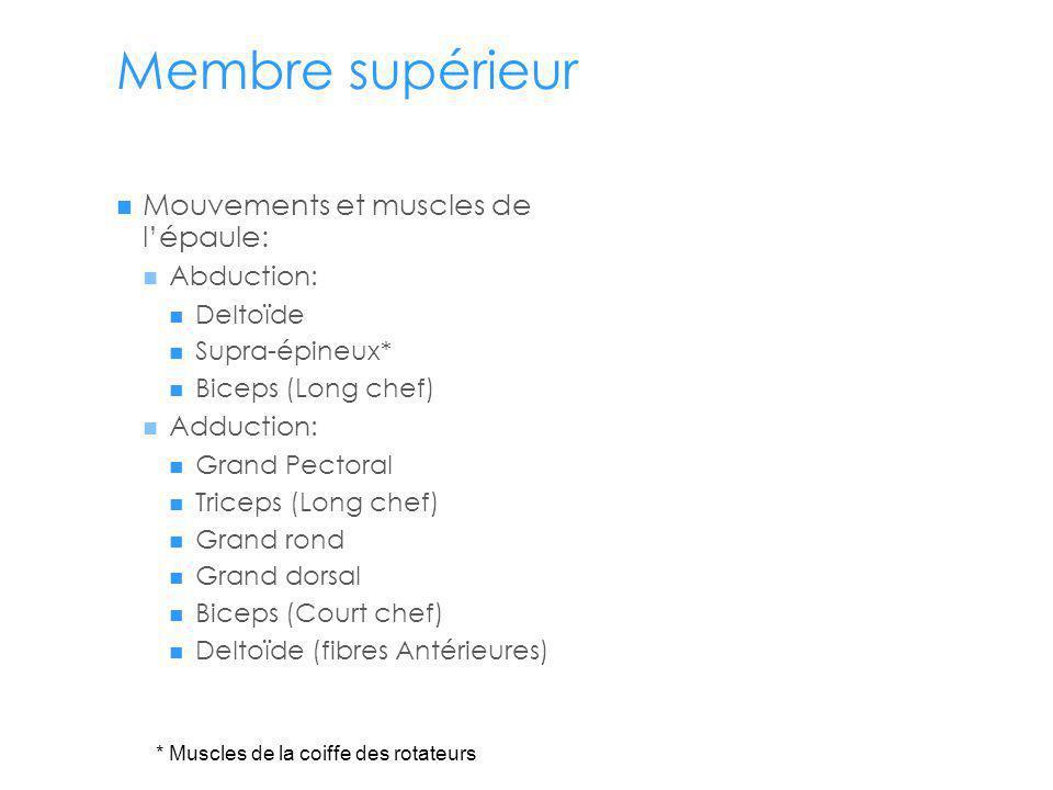 Membre supérieur Mouvements et muscles de l'épaule: Abduction: